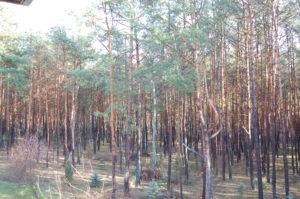 Sosnowy Las Agroturystyka Świętokrzyskie Grynwald